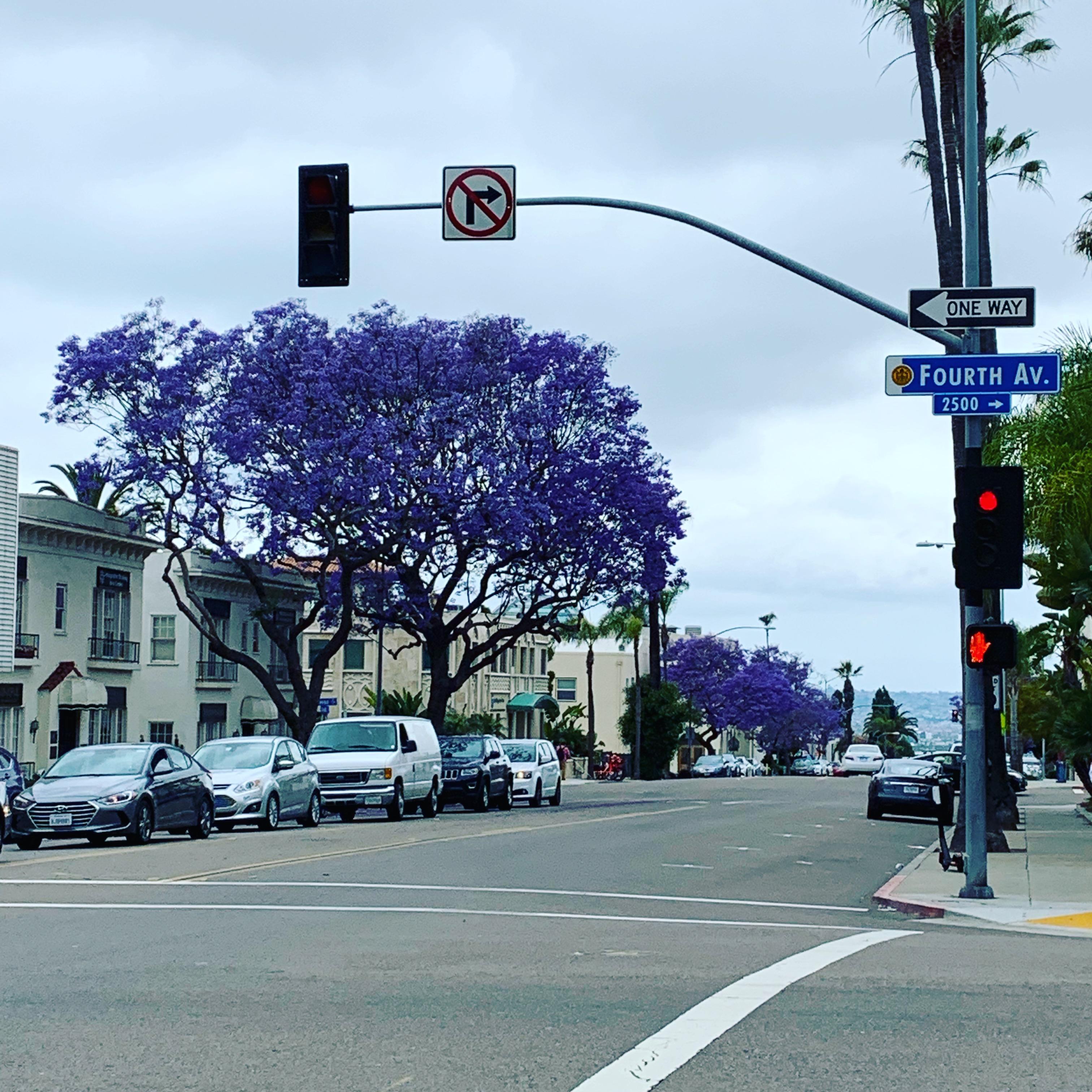 Bäume in San Diego | Lerne, das schöne zu sehen